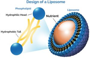 design of liposome